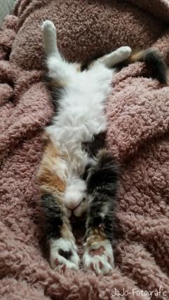 Baby Dani, Slapend, gelukkig volgens de 2 grote lummels.