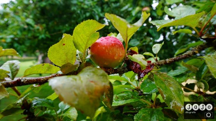 Appelboom, Fruithof, Harkema