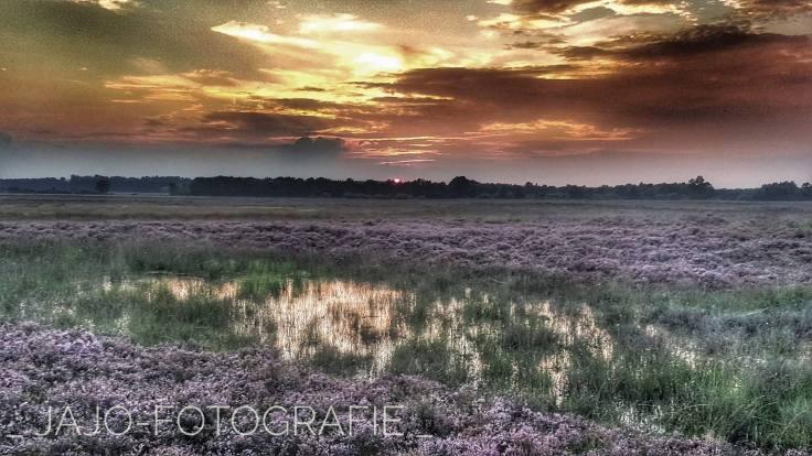 Heide, zonsondergang. Drenthe