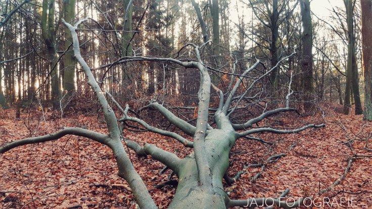 Natuur, staatbosbeheer, bomen, omgevallen