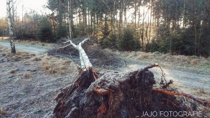 Storm, staatsbosbeheer, Omgewaaide boom, wandelroute