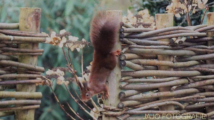 Maandoverzicht Januari, eekhoorn, natuur.