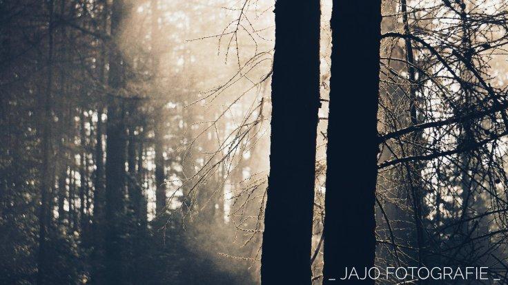 Maandoverzicht Januari, Drenthe, bos, bomen.