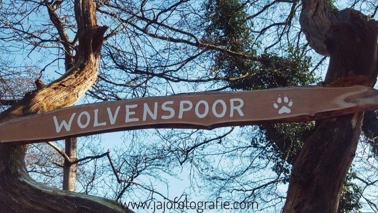 Wolvenspoor, wandelen, naar buiten. Koud, winter wolf, Drenthe