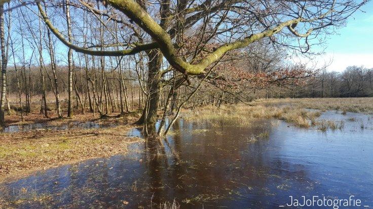 Wolvenspoor, Drenthe, bomen, Bos