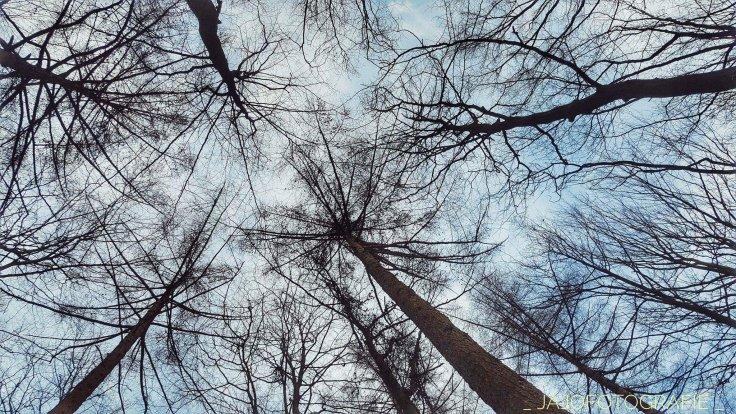 Drouwen,  drenthe, bomen, bosrijk, bos