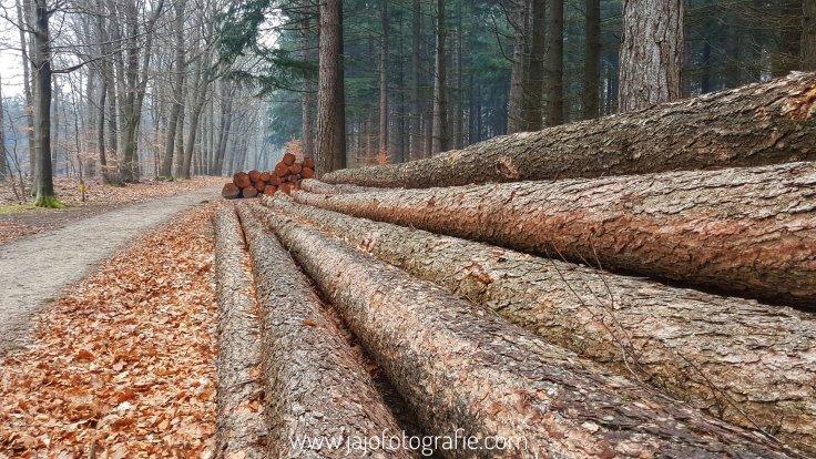Houtproductie, boomstammen, staatsboscbeheer, vrenpluisroute