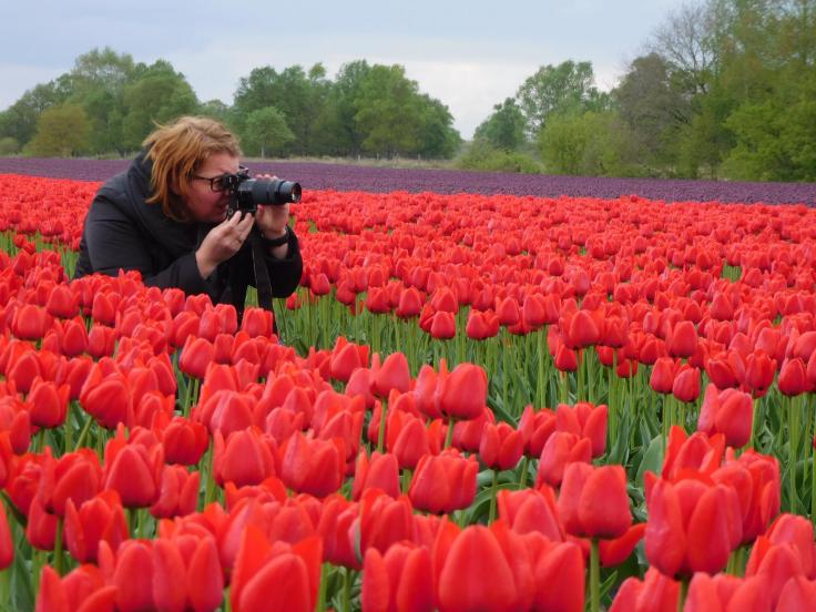 Fotografie. Tulpen, SonyAlpha, Tulpenroute, Drenthe
