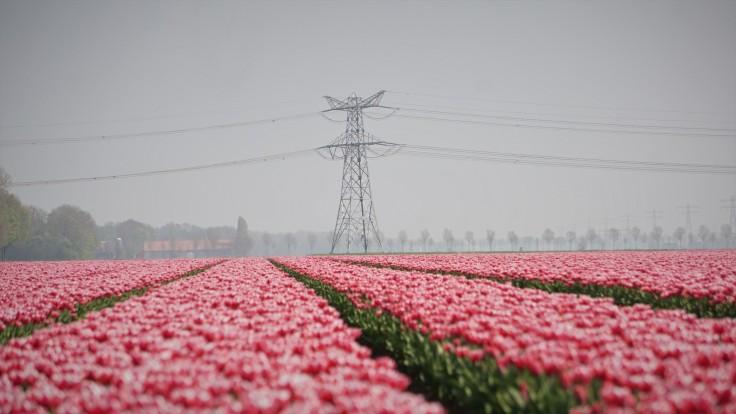Tulpenroute, Noordoostpolder, Tulpen, Schokland