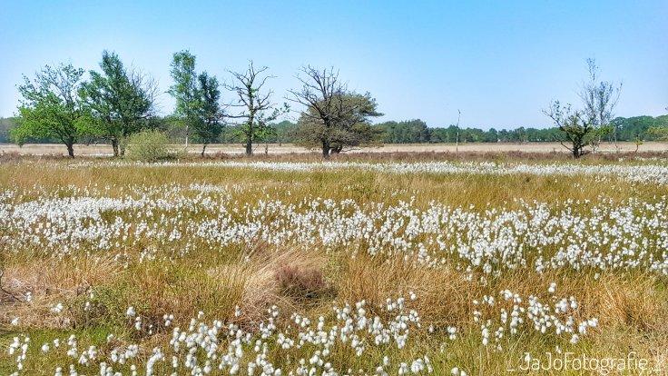 Veenpluis, boswandeling, Dwingeloo, Drenthe, Spier, Wandelen