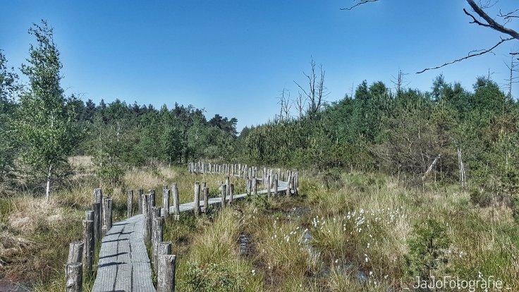 Boswandeling, Dwingeloo, Drenthe, Wandelen, Plankenpad, Natuur, Route