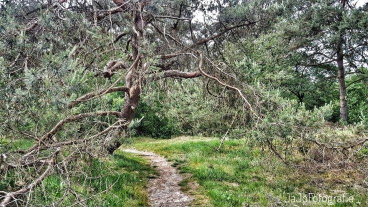 Oer't Veld Route, Drenthe, Natuur, Wandelen, Landschap  Orvelte