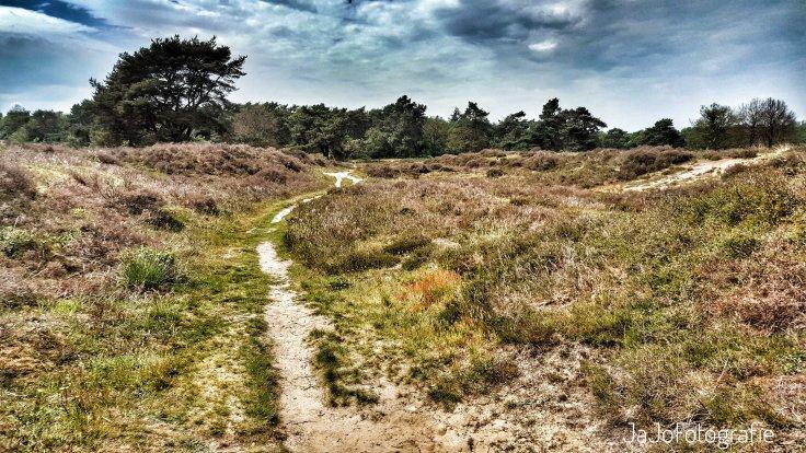 Orvelte, heide, Oer't Veld Route, Drenthe, Wandelen, Natuur, landschap