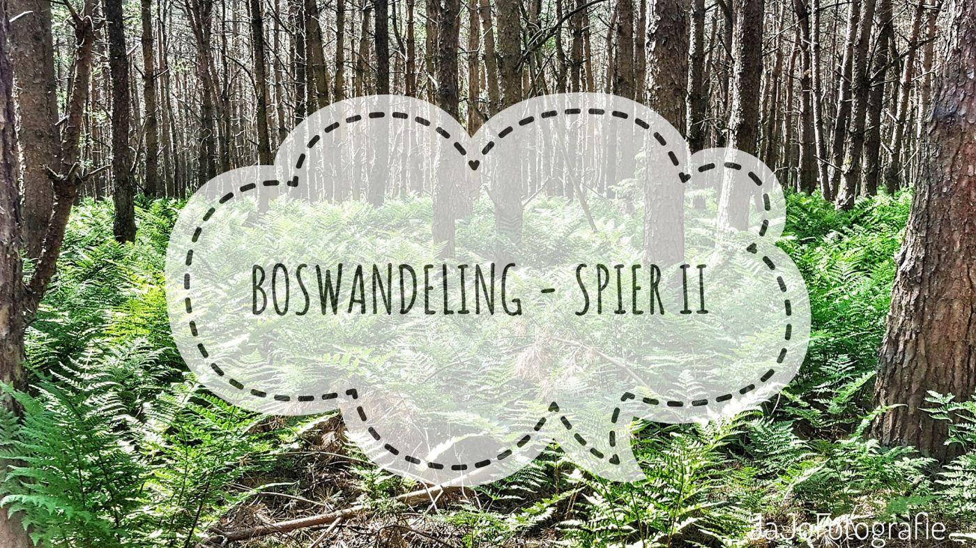 Dwingeloo, spier, wandeling, Drenthe, Lopen, NTUUR