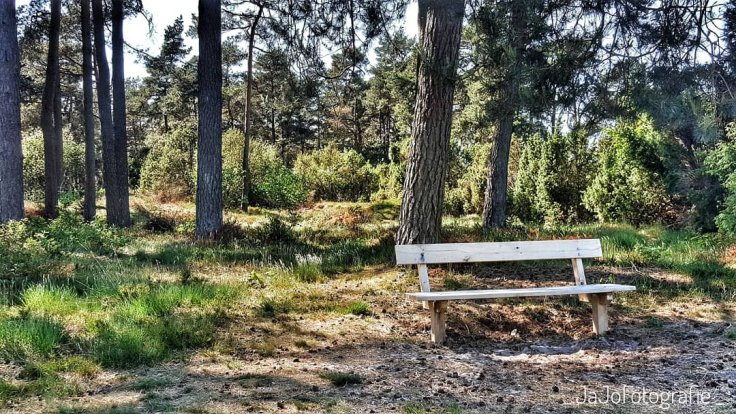 Wandelen, Drenthe, Spier, Natuurpoort, Boswandeling, Dwingeloo