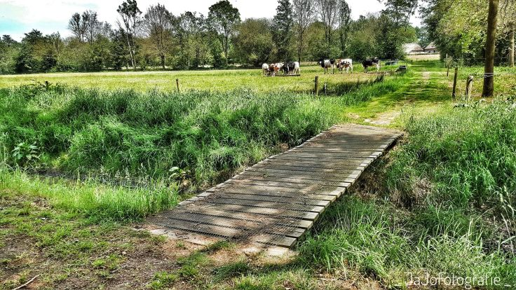 Koeien, Drenthe, Bruggetje, Oer't veld route, Wandelen