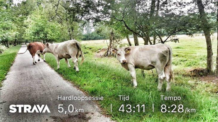 5 km, hardlopen, running, Assen, Run2Day, Schoenen, Brooks, Runnersworld