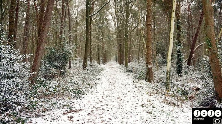 Winter in Assen, Assen, Sneeuw, Winterwonderwandeling