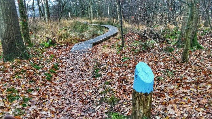 Wandelen, wandelen in Drenthe, Drenthe, Oudemolen, Wandel