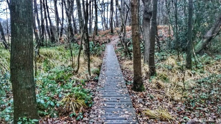 Wandelen in Drenthe, Wandelen, Oudemolen, Drenthe