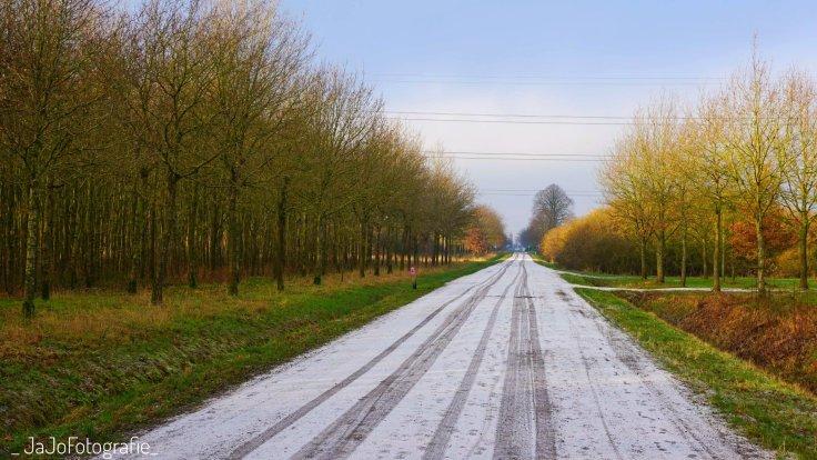Arboretum Assen, Bomentuin, werelddeel Europa, Sneeuw wandelroute Assen