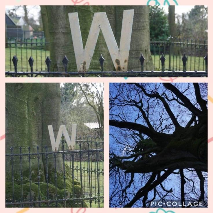 Wilhelmina boom, Kroning Wilhelmina, Koningslinde,