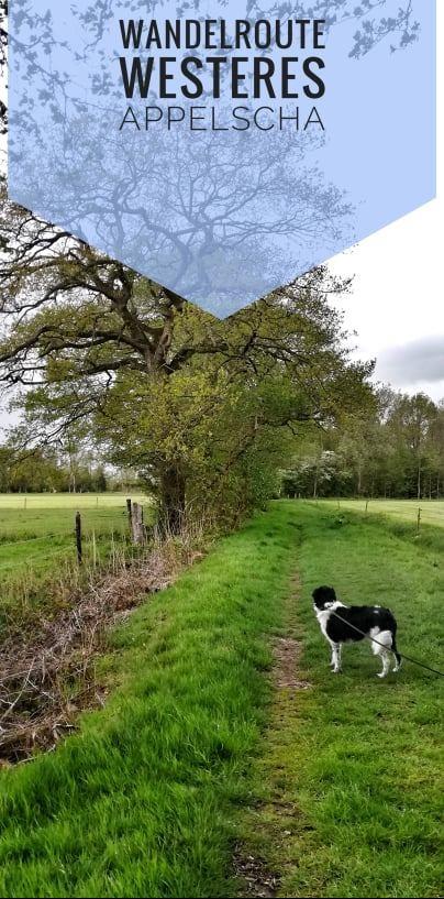 pinterest, Appelscha, Hond, Wandelen, Drents Friese Wold, Westeres wandeling,