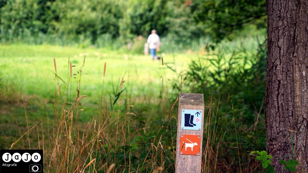 Puppy, Wandelen, Laarzenpad, Staatsbosbeheer, Drenthe, Norg, Natuur, Landschap, Vlinder, Flora en Fauna.