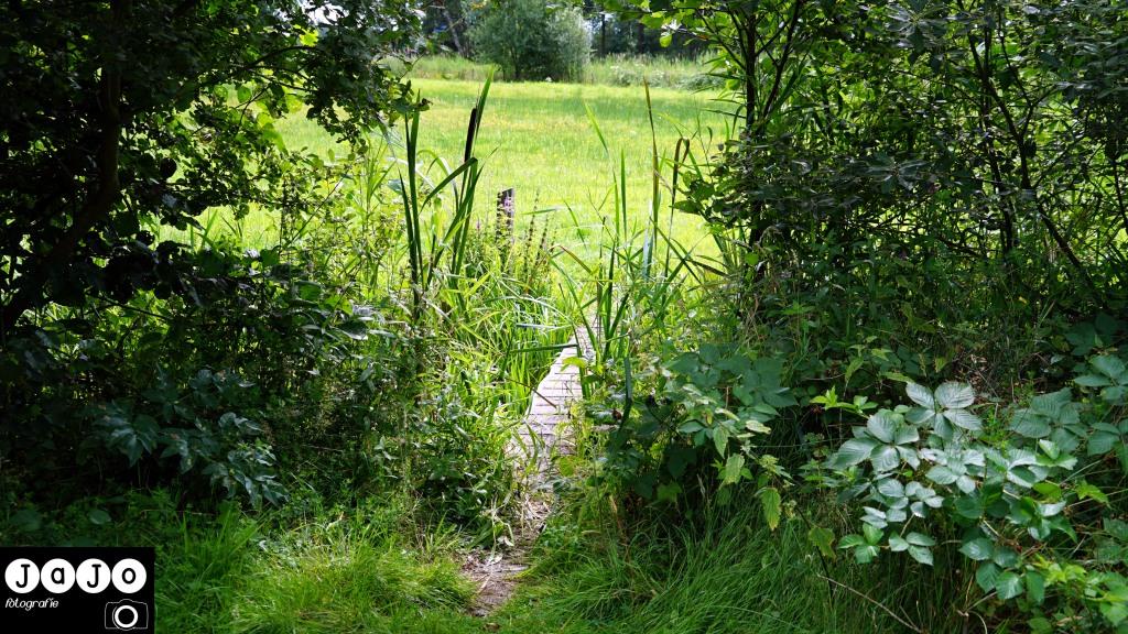 Het mini bruggetje. Puppy, Wandelen, Laarzenpad, Staatsbosbeheer, Drenthe, Norg, Natuur, Landschap, Vlinder, Flora en Fauna.