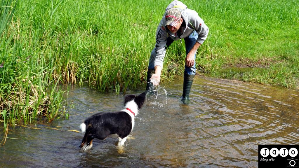 watergewenning voor Mick. Hij ''duikt'' er uiteindelijk zo in. Puppy, Wandelen, Laarzenpad, Staatsbosbeheer, Drenthe, Norg, Natuur, Landschap, Vlinder, Flora en Fauna.