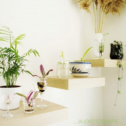 Stek je plant, Stekjes, Vaderplant, Graslelie, Planten in huis, interieur, fotografie,