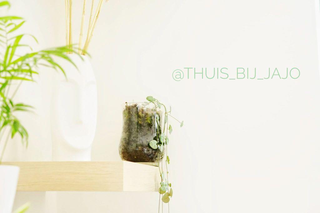 chinees lantaarnplantje, wonen, interieur, instagram, thuis bij jajo, op de plank in de keuken staat dit plantje.
